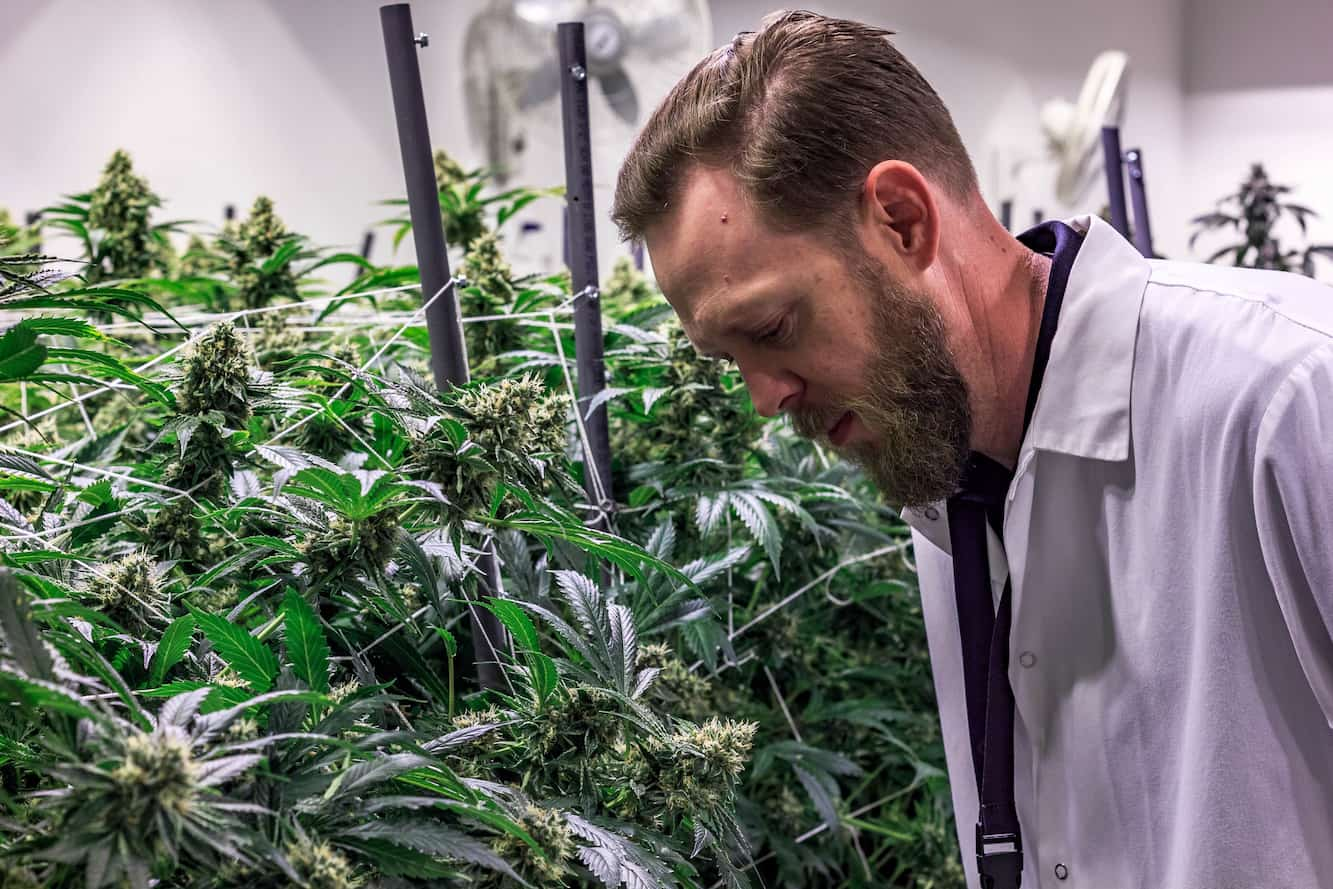 If You're Buying Your Weed Based on the THC Level, You're Doing it Wrong.